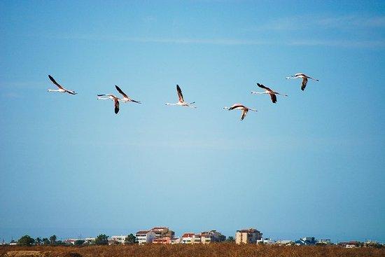 Tour en Segway d'ornithologie au parc...