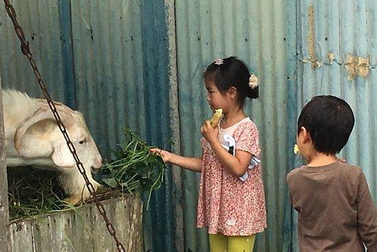 沖縄のおじいと一緒にサトウキビ刈り体験