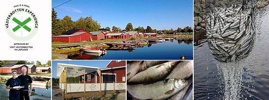 Suecia: getlstd_property_photo