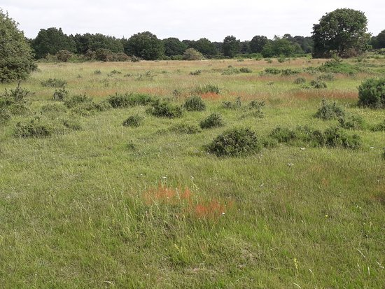 Barnham Cross Common
