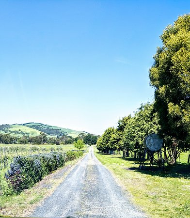 Glen Forbes, Austrália: Tree-lined driveway that takes you to the Cellar Door!
