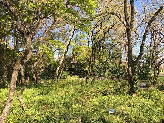 Odorikoso Park