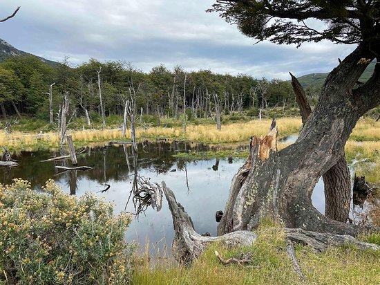 Tierra del Fuego National Park, Argentina: getlstd_property_photo