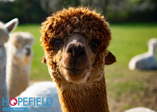 Brentwood, UK: Meet some of our adorable animals!
