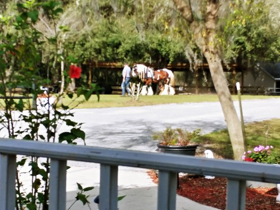 Floral City, FL: Working the horses
