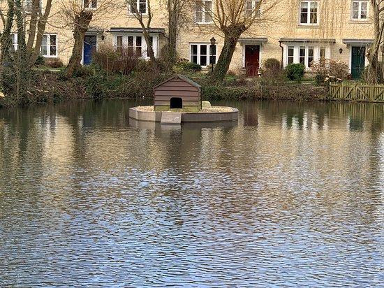 Moreton In Marsh Duck Pond