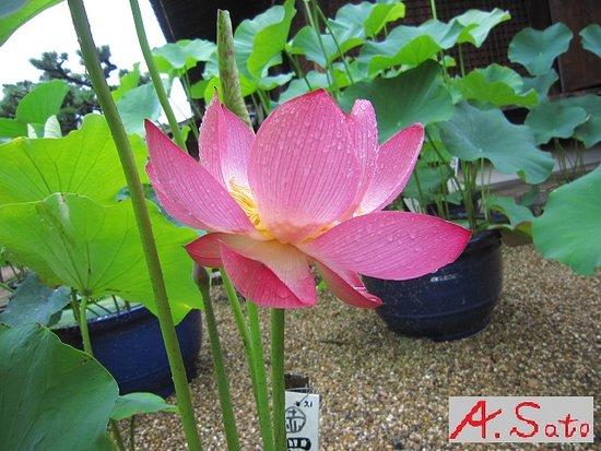 Hokongo-in Temple Garden