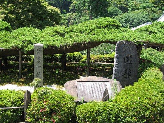 Yoshimine-dera Temple Yuryu no Matsu