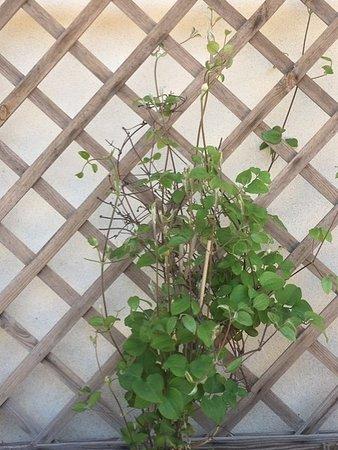 Fleurs de la terrasse