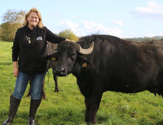 Ballingeary, Irlandia: Dorothy the farm guide with Betsy the farm's  pet buffalo