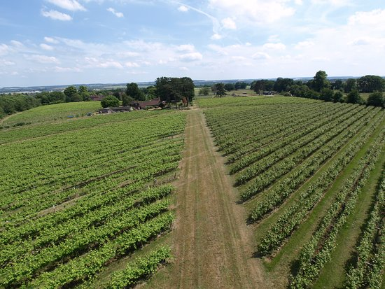Wallingford, UK: Welcome to Brightwell Vineyard!