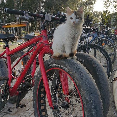 Akyaka bisiklet