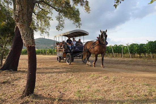 In a carriage among the vineyards, visit of the cellar, tasting of...