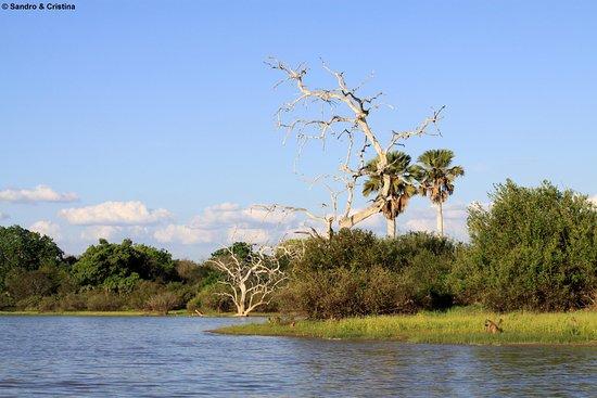 Tanzania - Selous Game Reserve - Fiume Rufiji