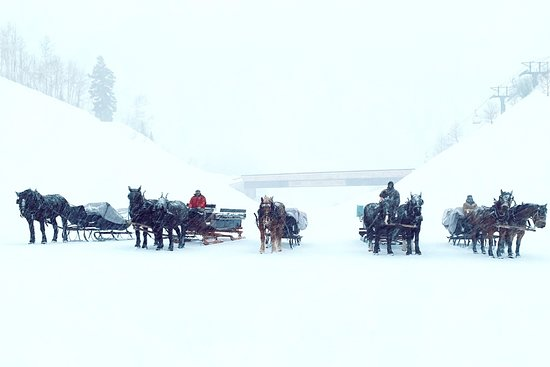 Sleigh rides at Deer Valley Ski Resort