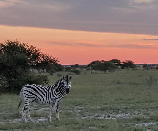Nxai Pan National Park, Botsuana: game drives (included)