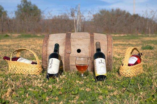 Tour de cata de vino, singani y queso...