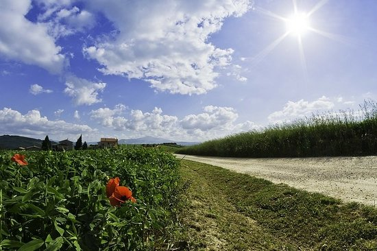 Val d'Orcia Private Full-Day...