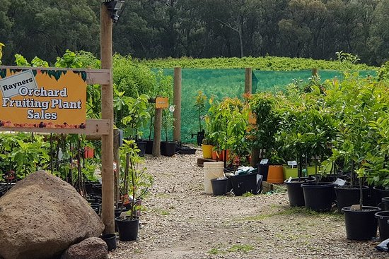 Yarra Valley Wineries and Rayners ...
