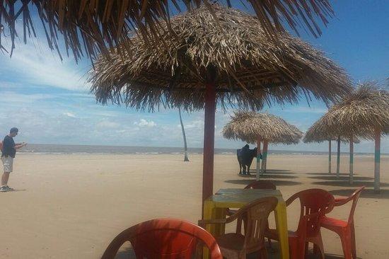 Amazon Amazing Tours, Ilha do Marajó