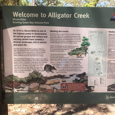 Alligator Creek Photo