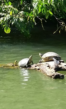 Monkey River Town, Belize: When you are here in Belize, and you love to see nature at its best give us a call at 6106180