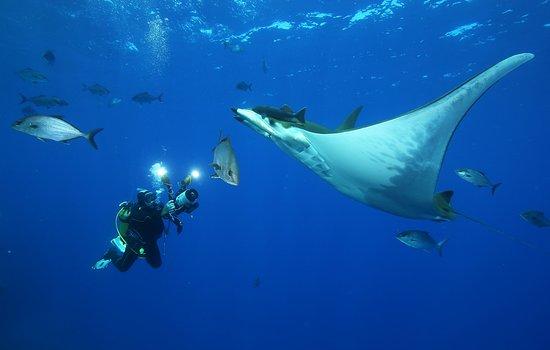 Season Challenge Azores Islands Diving Center