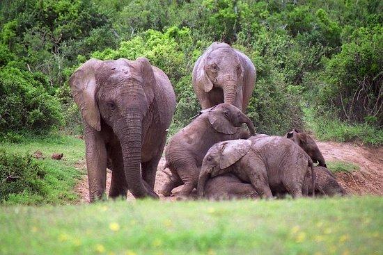 Ultimate Addo Elephant National Park...