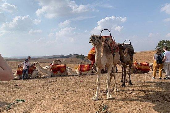 Excursion d'une journée à Marrakech...