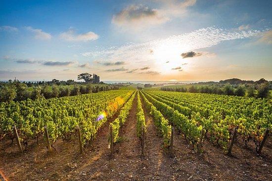 """""""葡萄酒之旅和品尝-Nemea"""""""