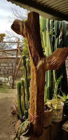 Toconao, Chile: Madeira do cactus