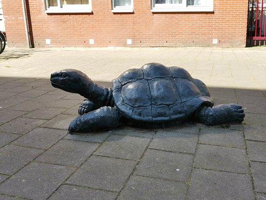 Onbekende artiest Schildpadden