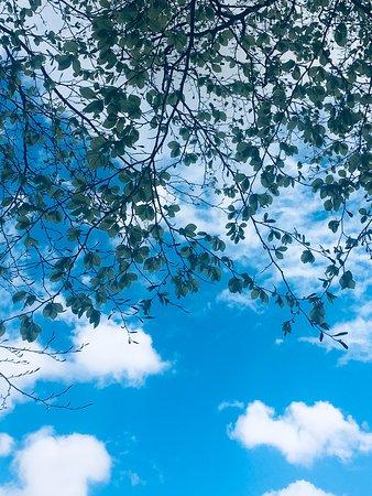 Rivington, UK : Fresh spring air x daily walk ⛅️ 🌳☀️