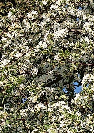 Feldkirchen, Niemcy: Blooming Spring Colors🎀🌷🦋🐞🦋🌷🎀