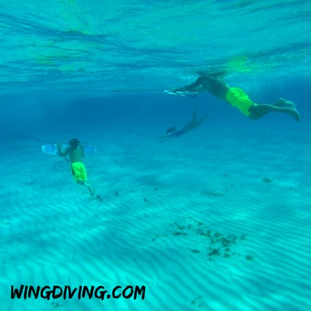 Wing Diving