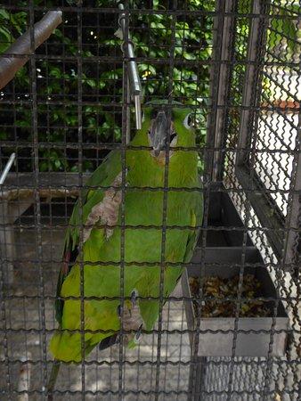 Ein sprechender Papagei, der dort gehalten wird.