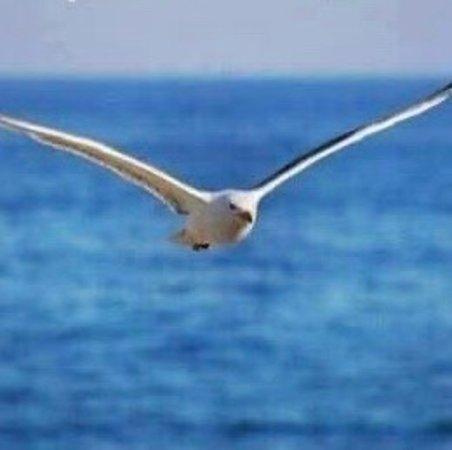 Alicudi, Ιταλία: La libertà del Gabbiano nel blu del mare .... 🦅🦅🦅