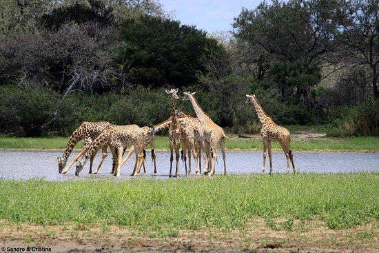 Selous Game Reserve - Il simbolo della Tanzania