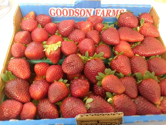 Wimauma, FL: Box of Strawberries