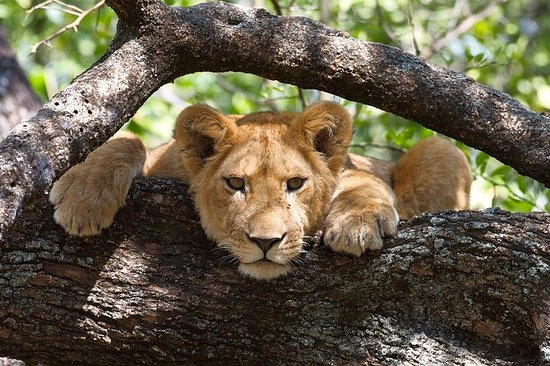 6 Days Tanzania Private Safari Tour