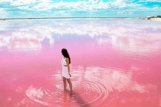 Las Coloradas Natural Pink Lake Tour...