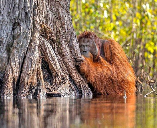 มาเลเซีย: Borneo 7