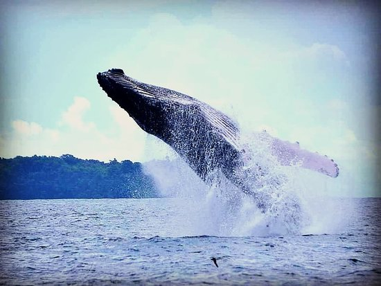 Drake Bay, Costa Rica: Whale-watching Tour