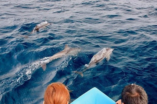 Dolphin Watching & Sight - Seeing