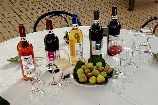 Dégustation de vins Daniele Cantine