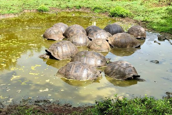 Join Online our Giant Tortoise Tour...