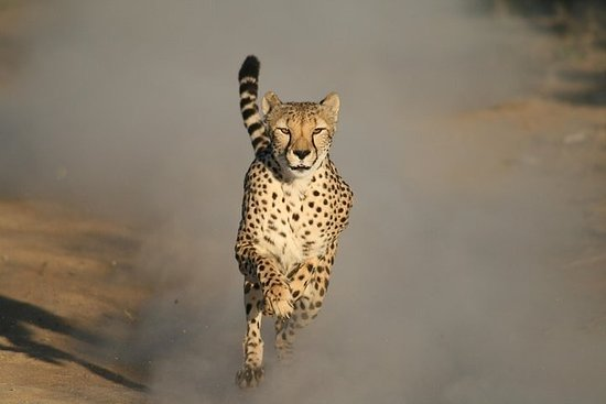 Cheetah Outreach and Cape Winelands ...