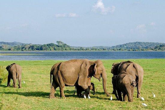 Transfer from Colombo to Trincomalee or Nilaveli - Elephant safari en...