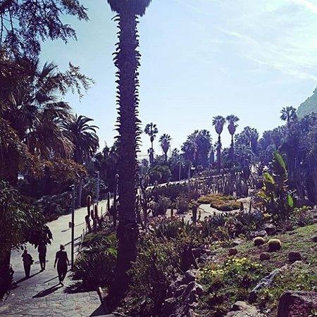 jardines mossen costa - Mossen Costa I Llobera Gardens Ticket