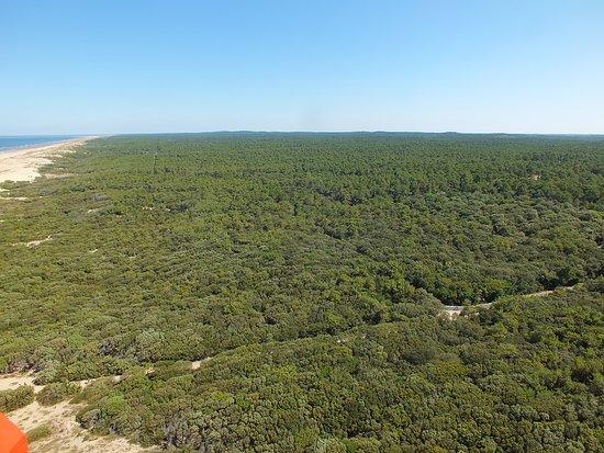 Forêt de la Coubre